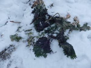 wintergarden2